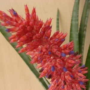 Bromeliads as focal points